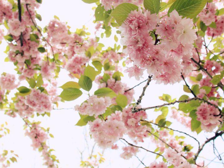 Frühlingsduft liegt in der Luft
